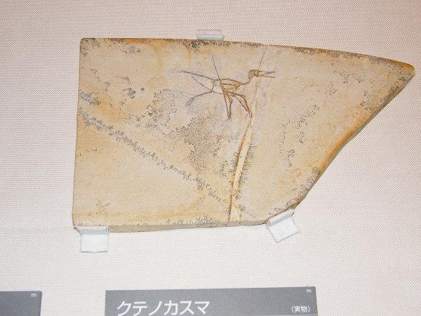 世界最大の翼竜展~恐竜時代の空...