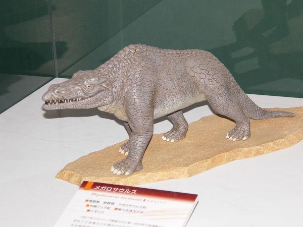 メガロサウルスの初期復元モデル 分類:竜盤類 獣脚類 メガロサウルス科... 恐竜2009−砂漠