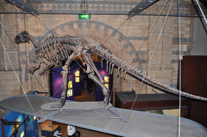 恐竜・翼竜ガイド(4)竜盤類・...